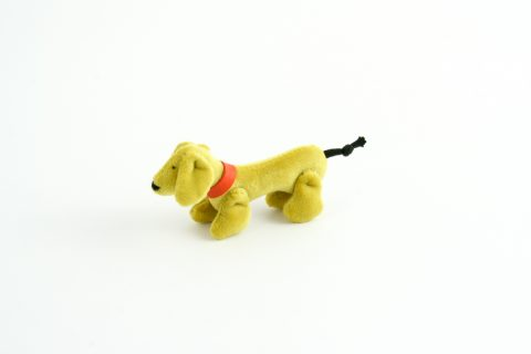 Joel - Small dogs